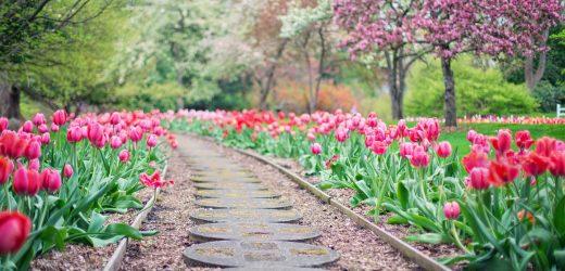 Pourquoi confier l'aménagement de son jardin à un paysagiste ?